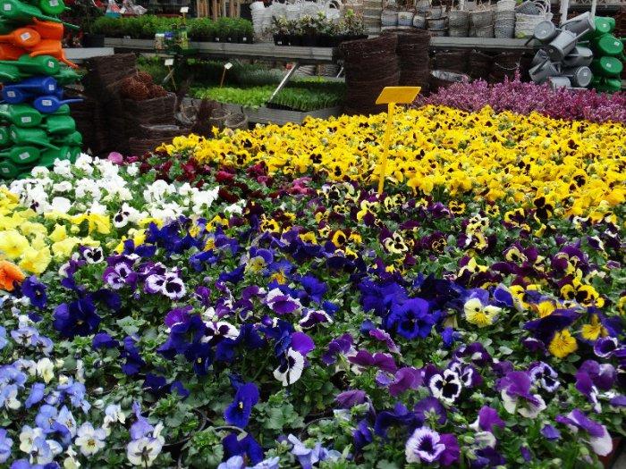 9 Kwiecie 2018 W Centrum Ogrodniczym KAPIAS 14
