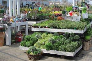 Centrum Ogrodnicze Kwiecień Kapias Ogrody Do Zwiedzania